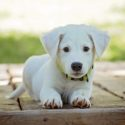 Puppies now used in world of scams