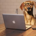 Would you switch jobs to be able to take your dog to work?